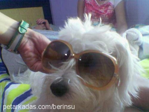 irem berk profile picture