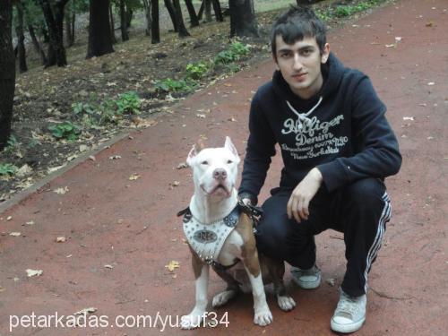 Yusuf Elmas Profile Picture