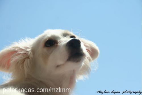 mm -mm profile picture