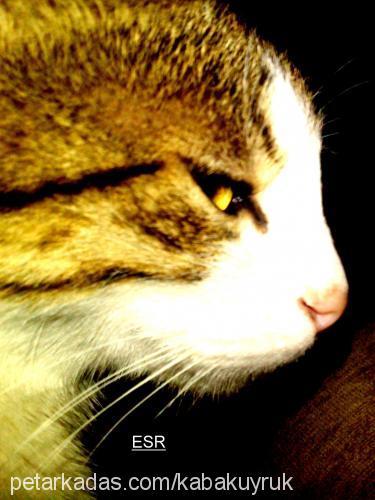 esra aktaş profile picture