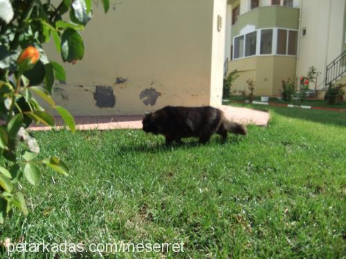MESERRET DEMİREL Profile Picture