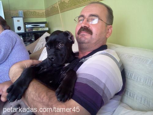 Bülent TAMER Profile Picture
