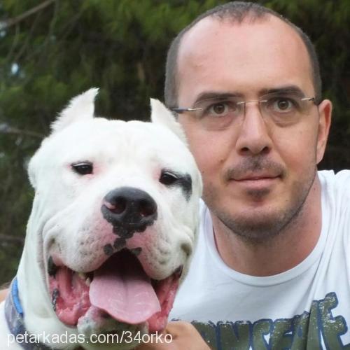mustafa gocek Profile Picture