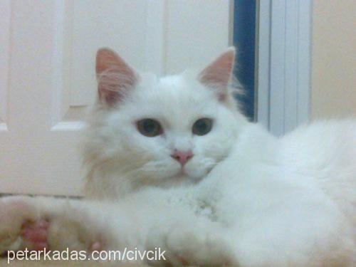 çiğdem civcik Profile Picture