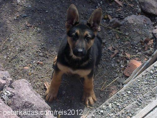 serkan kara profile picture