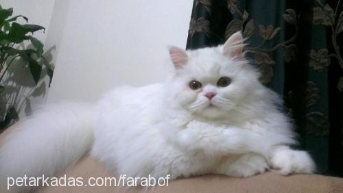 ayse gul korkutan profile picture