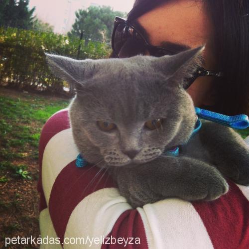 Beyza Barlas Profile Picture
