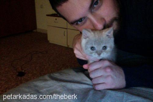 Mehmet Berk Arslan Profile Picture