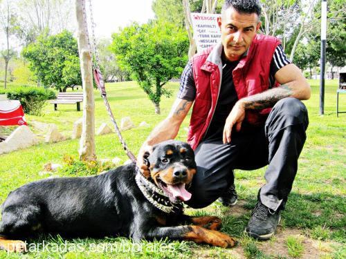 Bora & Ares TOSUN profile picture