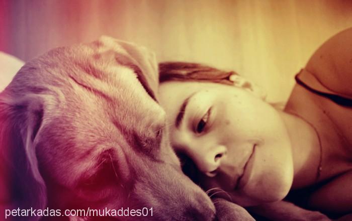 mukaddes cetin Profile Picture