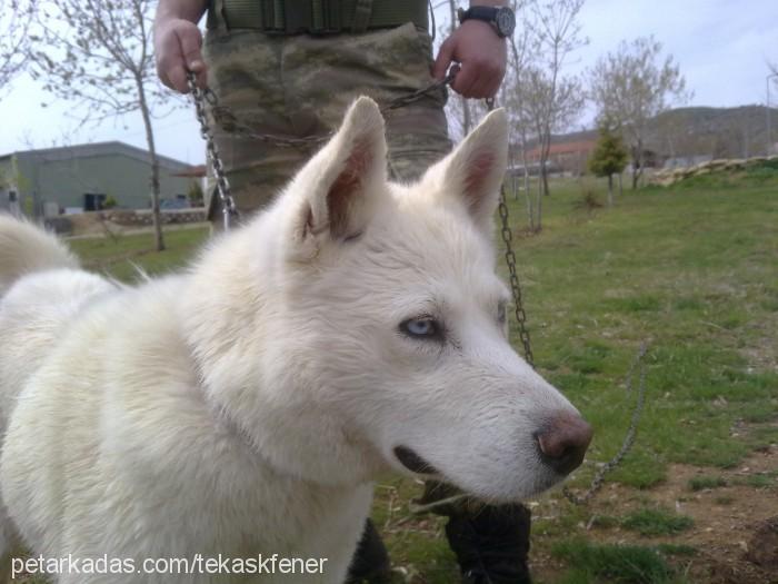 ismail altun Profile Picture
