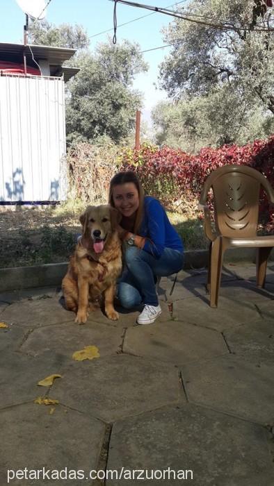 ARZU ÇAKIR profile picture