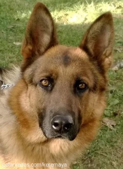kerem küçükoğlu Profile Picture