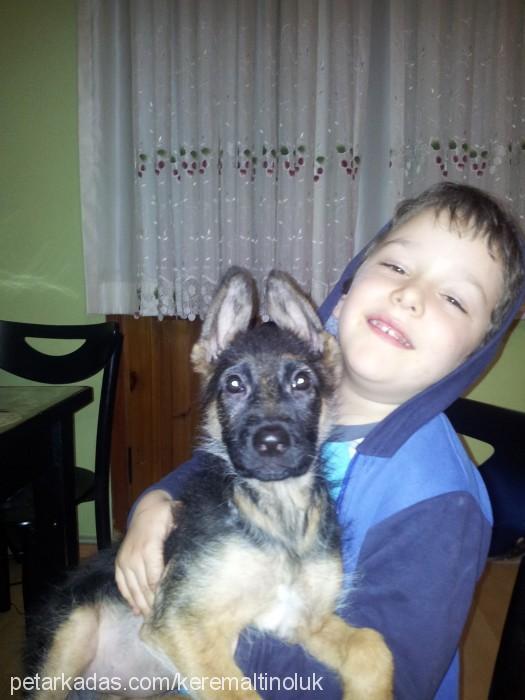 Çilek alman çoban köpeği Profile Picture