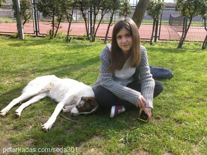 Seda Nur Çeviral Profile Picture