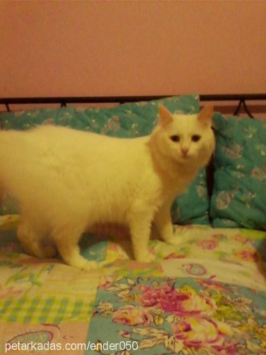 semra ölmez Profile Picture