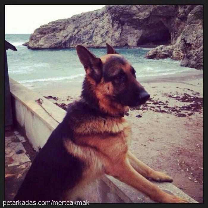 Mert Çakmak Profile Picture