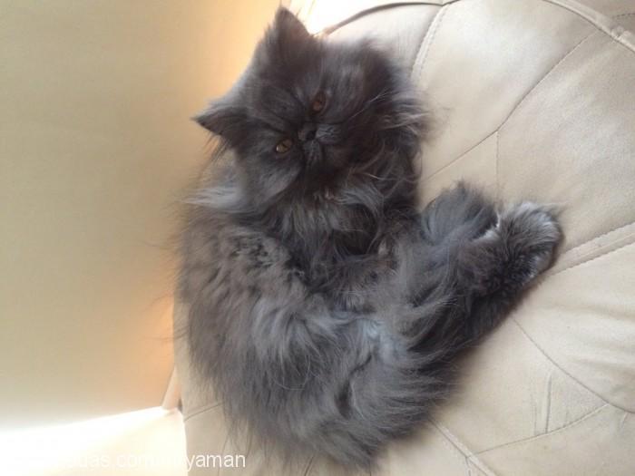 Rana Denlitas Profile Picture
