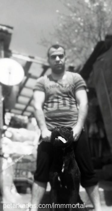 egemen şatoglu Profile Picture
