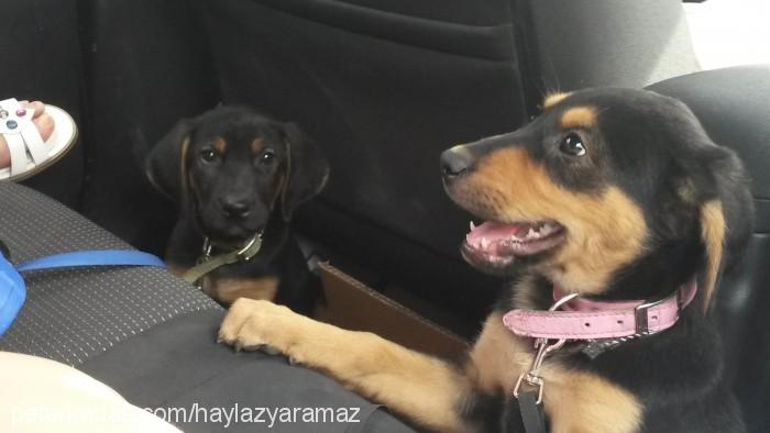 HYNY DOGS Profile Picture