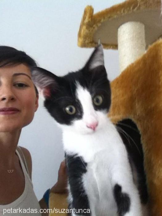 suzan tunca Profile Picture