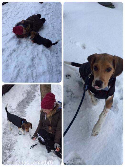pasa beagle Profile Picture