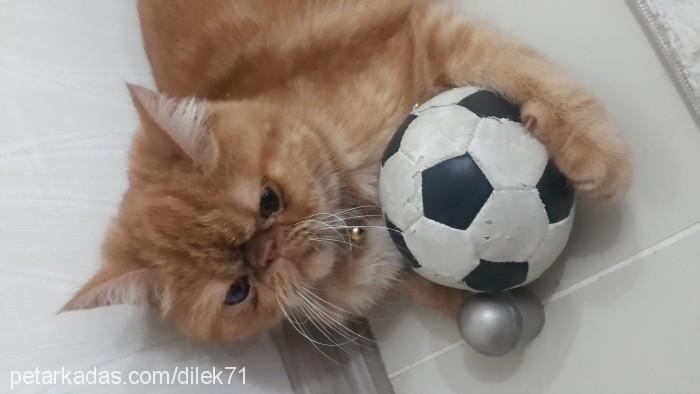 Dilek Topal Profile Picture