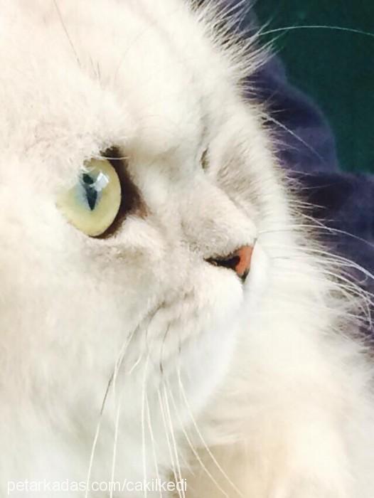 Işık Aydınoğlu Profile Picture