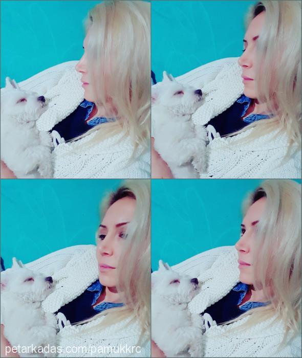 Zeynep Korucu profile picture