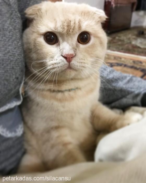 odİn Profile Picture