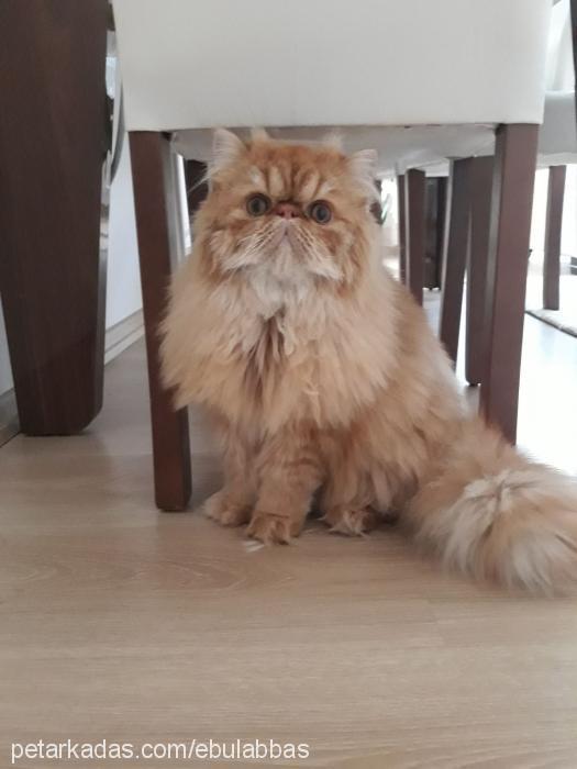 ebulabbas profile picture