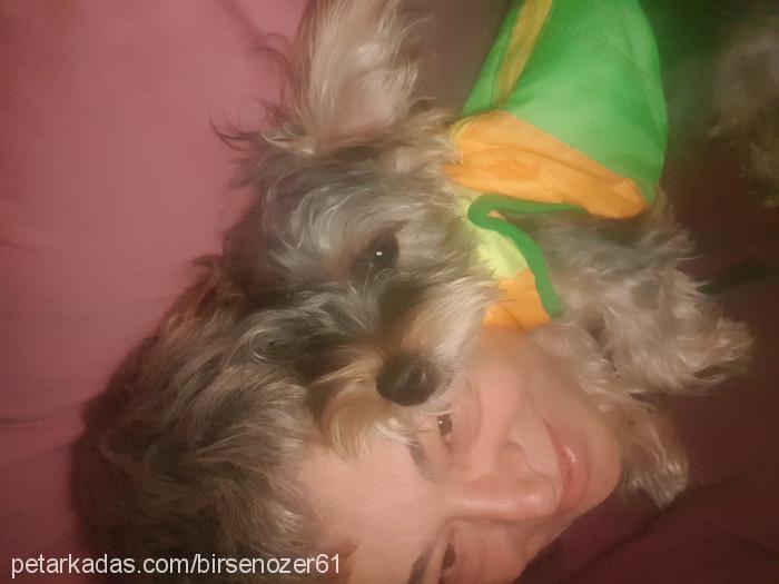 Birsen Ozer Profile Picture