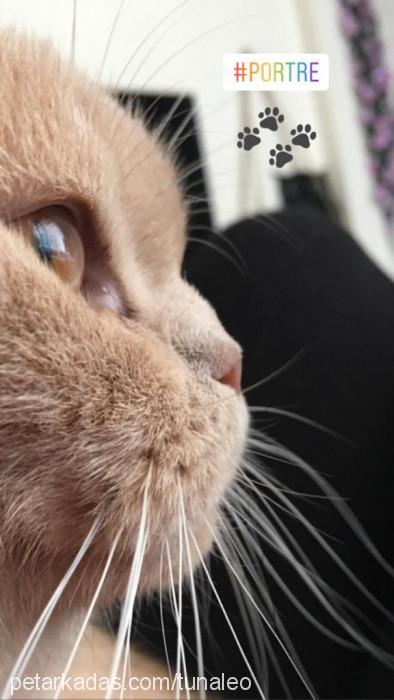 Ayşegül tuna Profile Picture