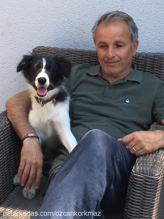 Özcan Korkmaz Profile Picture