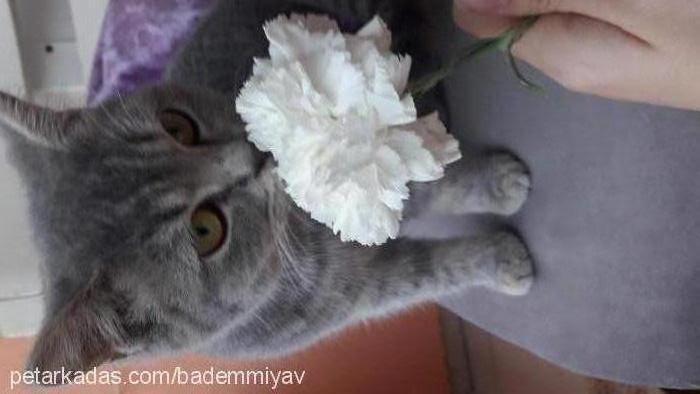 badem profile picture