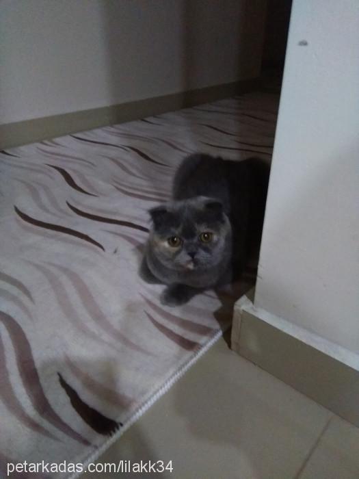 Derya Kyamil Profile Picture
