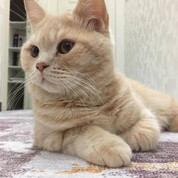 mehmet akif şahin Profile Picture