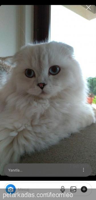 İlayda Akbay Profile Picture