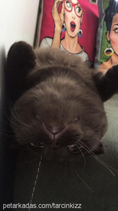 tarçın profile picture