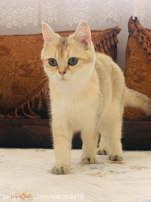 sakiz profile picture