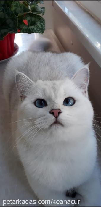 galadriel profile picture