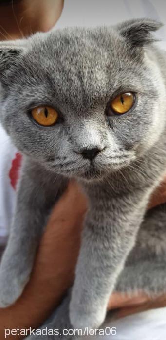 Barıs Akman Profile Picture