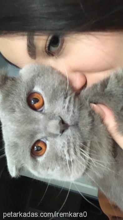 leo Profile Picture