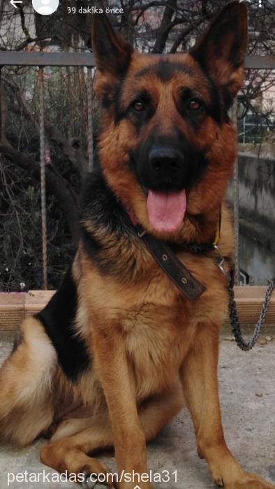 shela31 Profile Picture