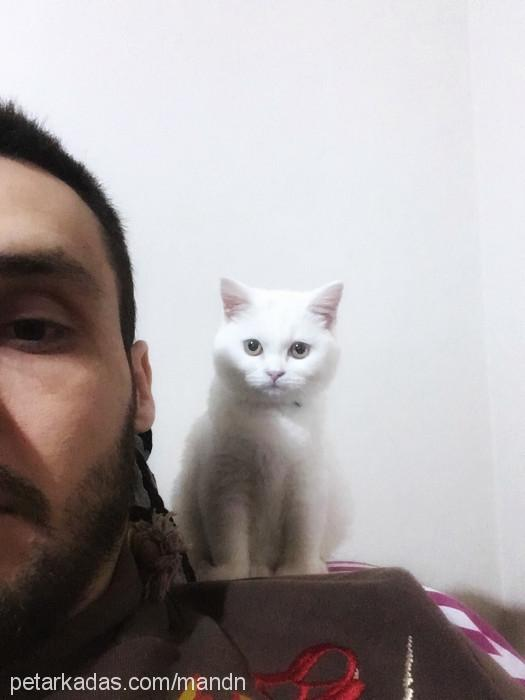 Mustafa Necati Profile Picture