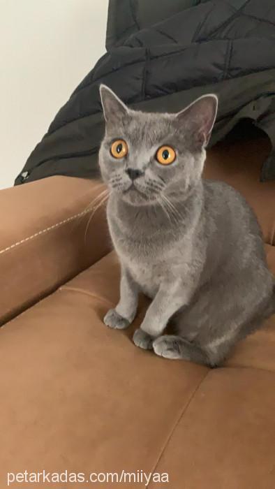Mertcan Polat Profile Picture