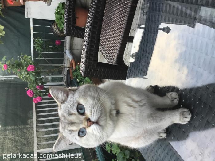 Emre Tali Profile Picture