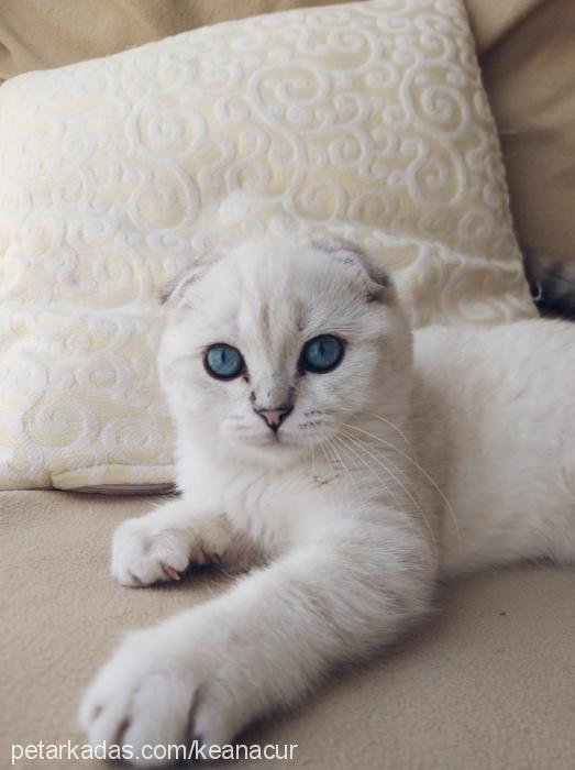 sİmba profile picture