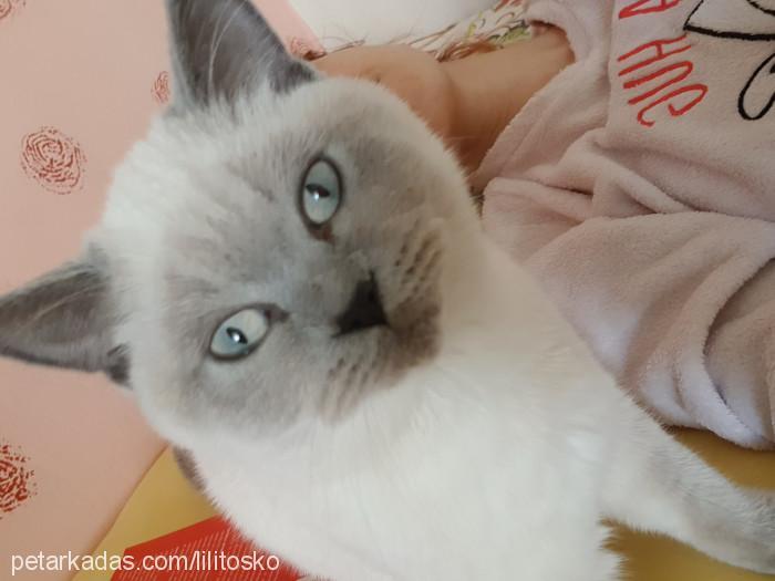 Şeyma Boydak Profile Picture