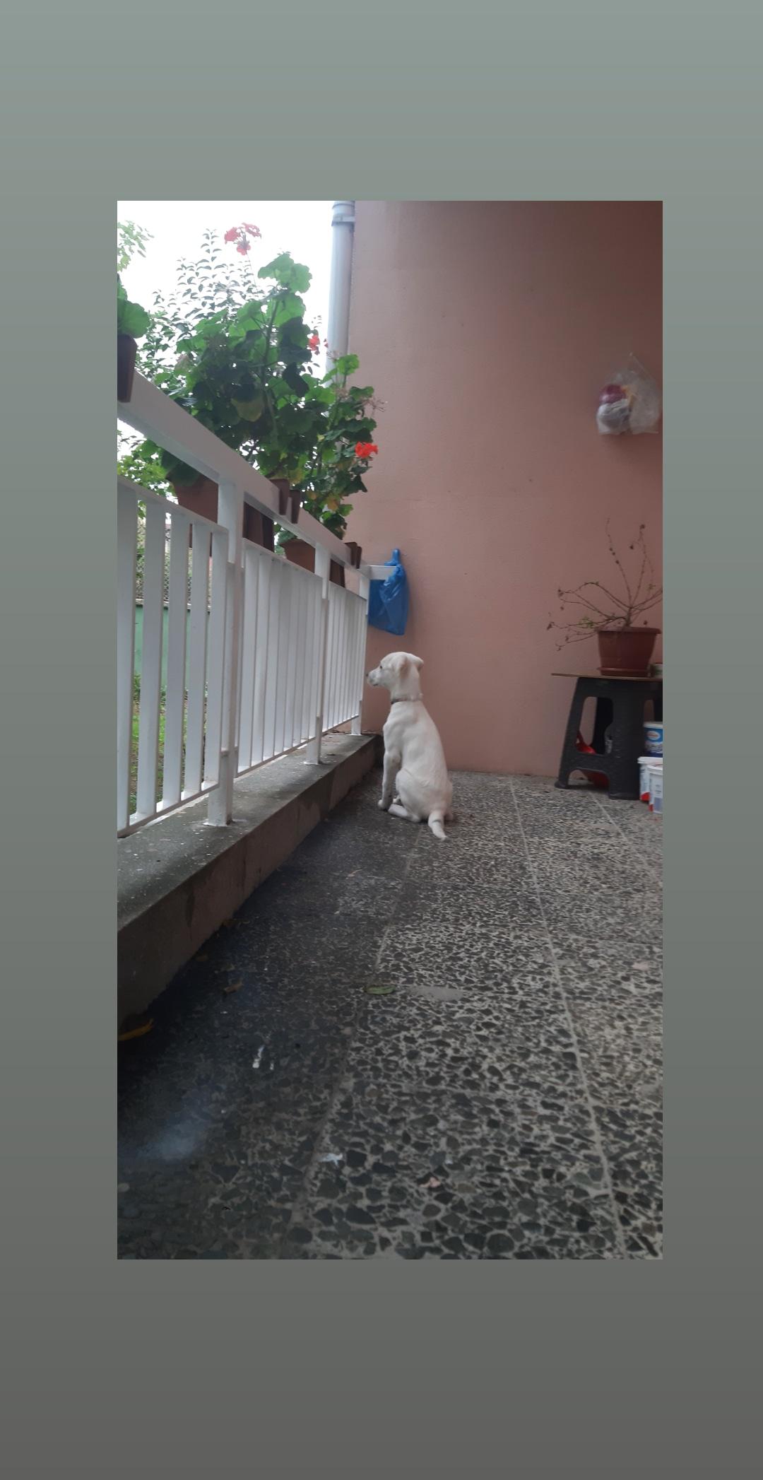 2.5 aylik köpeğime yuva a